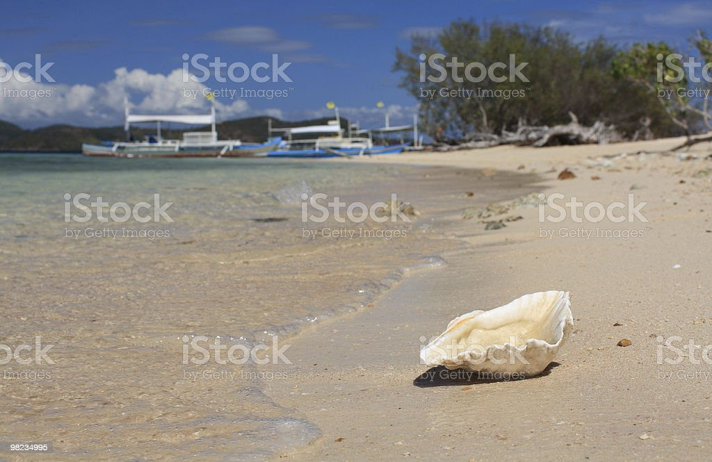 Conchiglia sulla spiaggia tropicale foto stock royalty-free