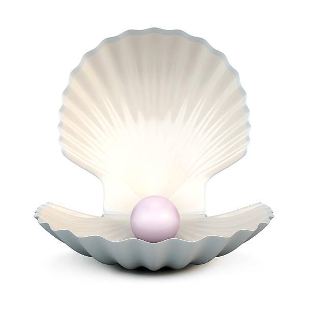 shell pearl na białym - mięczak zdjęcia i obrazy z banku zdjęć