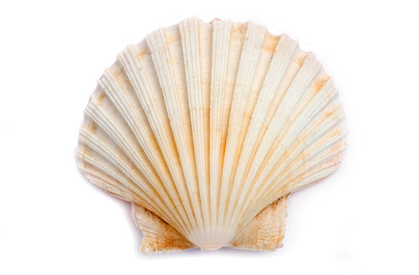 shell - animal shell stock pictures, royalty-free photos & images