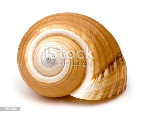 Isolated Snail Shell.