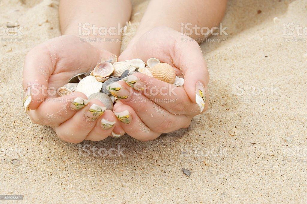 shell Lizenzfreies stock-foto