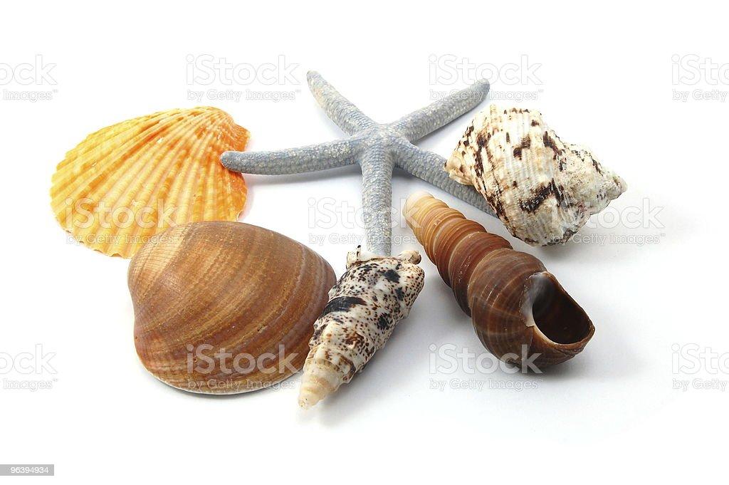 Shell - Royalty-free Animal Shell Stock Photo