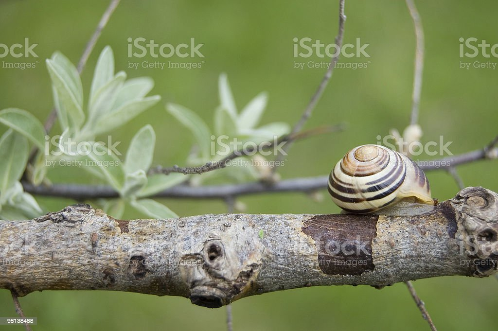 shell foto stock royalty-free
