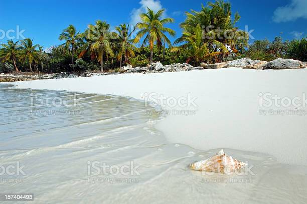 Shell washes up on tropical beach picture id157404493?b=1&k=6&m=157404493&s=612x612&h=a9aqbuxlj7hyz36br3ikpdwf8sswatxgt x1it8eue0=