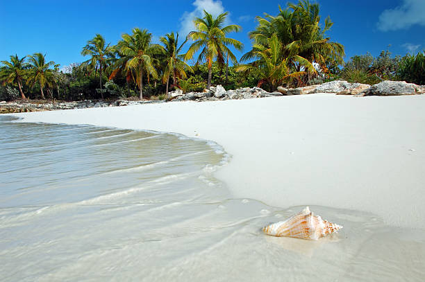 shell washes up on tropical beach - caribbean stock pictures, royalty-free photos & images