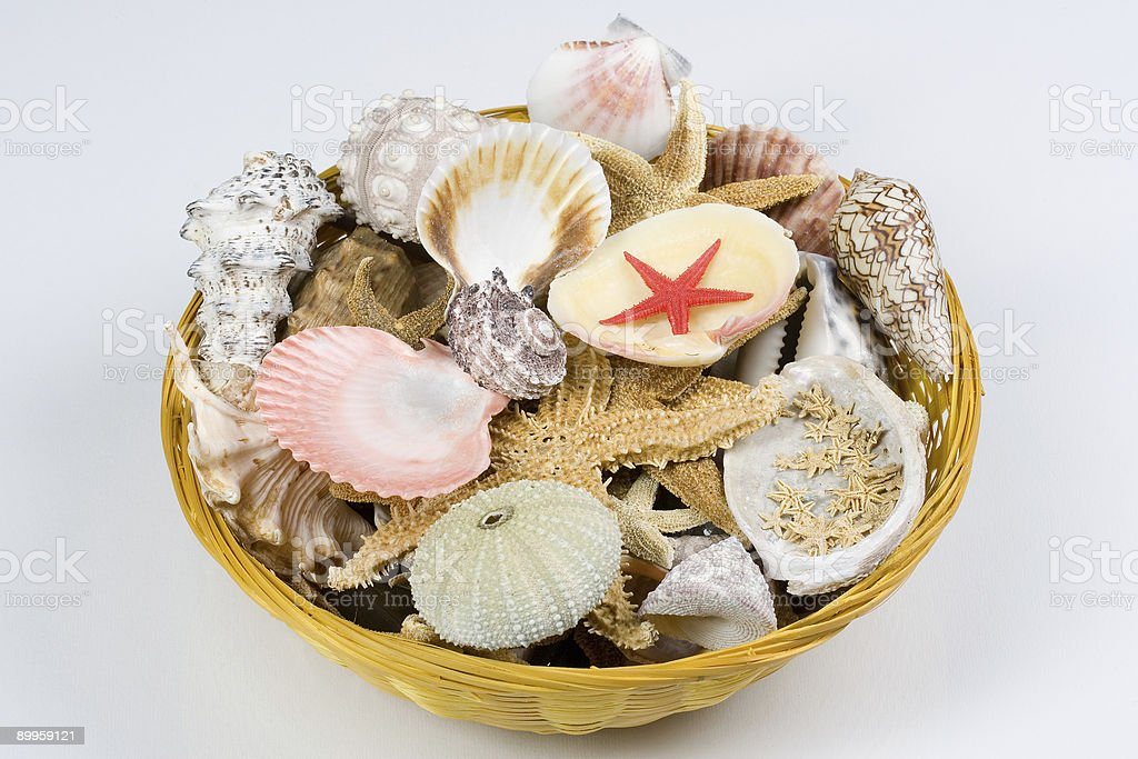 Shellbasket royalty-free stock photo