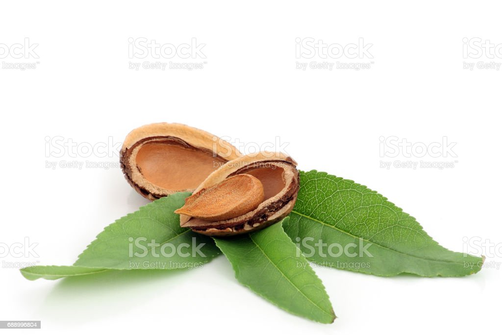 Shelled almonds and green leaves stock photo