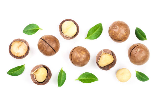 Shelled and unshelled macadamia nuts with leaves isolated on white background with copy space for your text. Top view. Flat lay pattern Shelled and unshelled macadamia nuts with leaves isolated on white background with copy space for your text. Top view. Flat lay pattern. macadamia nut stock pictures, royalty-free photos & images