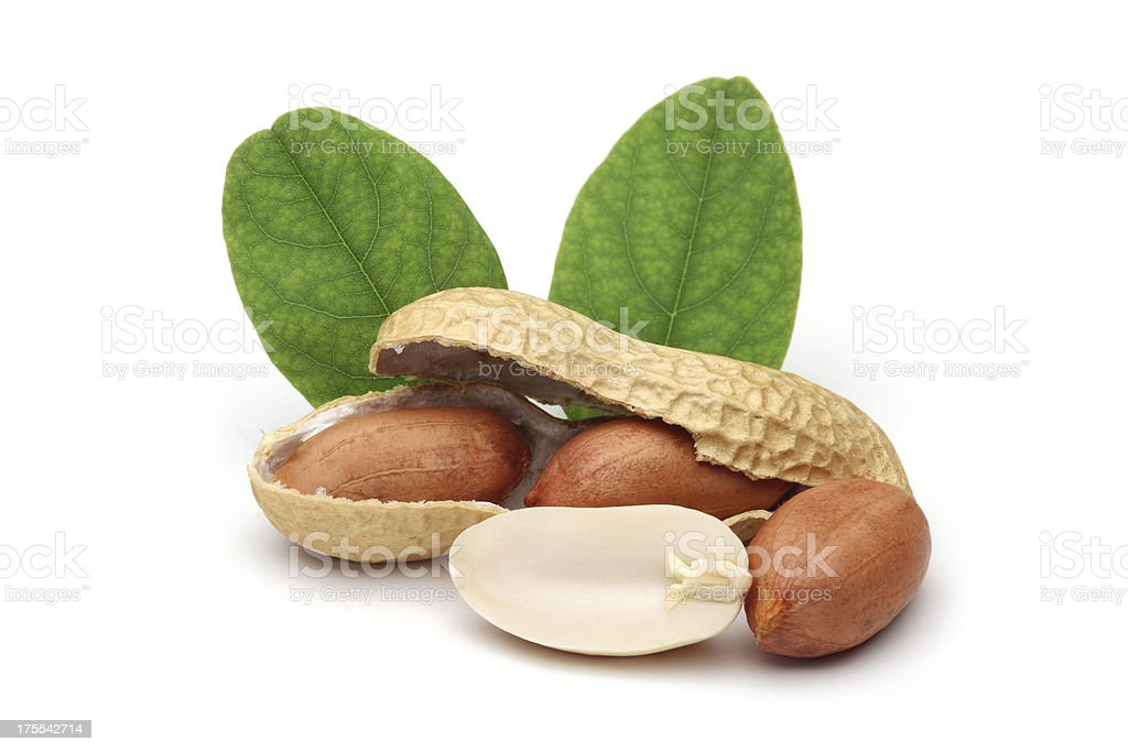 shelled peanuts and leaves stock photo