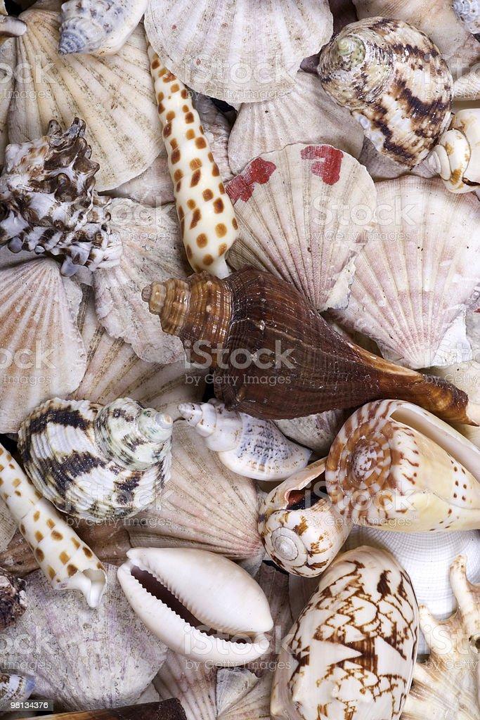 Shellfish background royalty-free stock photo