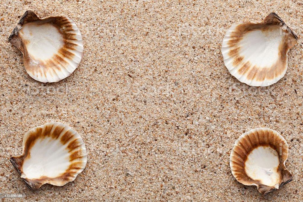Shellfish royalty-free stock photo