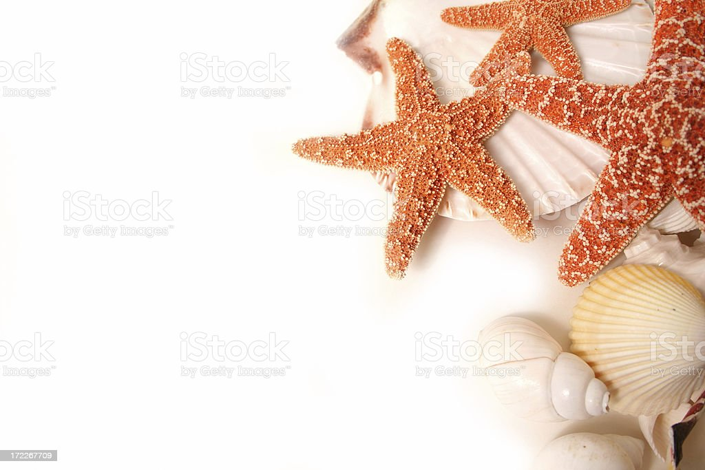 Shellfish Series royalty-free stock photo