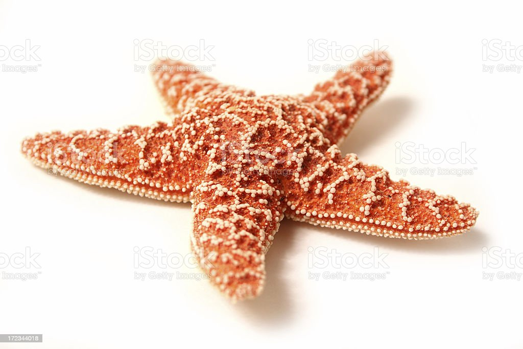 Shellfish Series stock photo