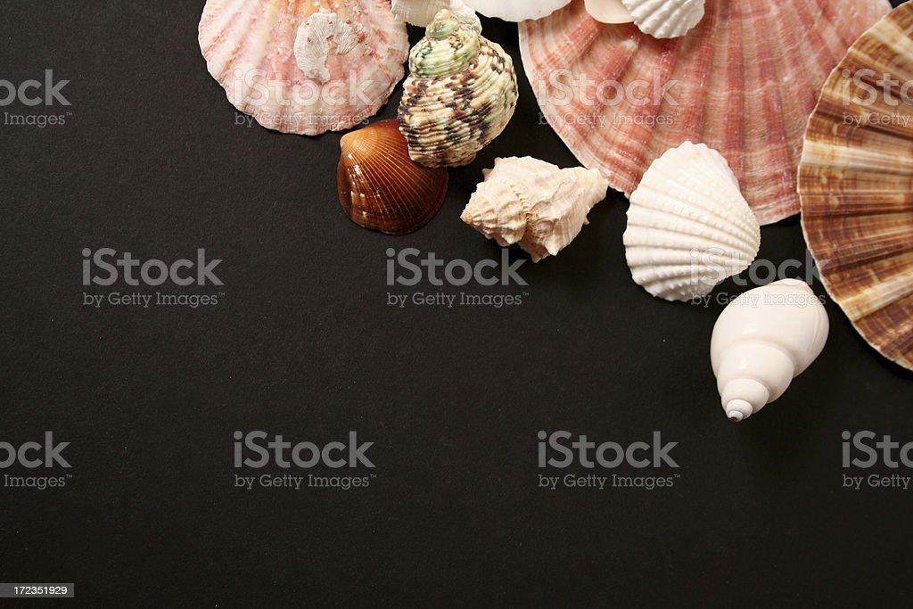 Serie mariscos foto de stock libre de derechos