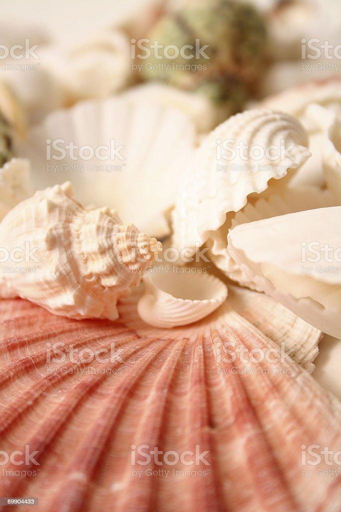 Shellfish Series royalty-free stock photo