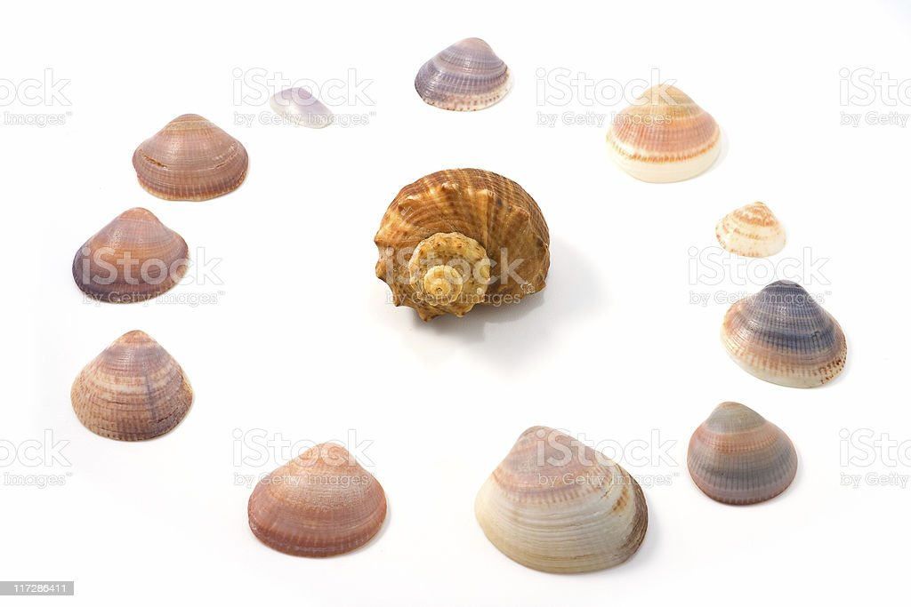 Shellfishes royalty-free stock photo