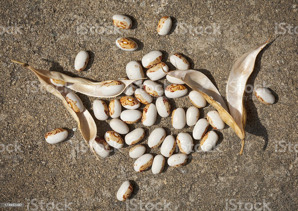 Shelling beans royalty-free stock photo