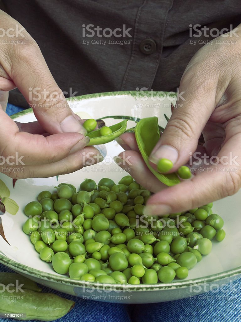 Shelling Peas stock photo