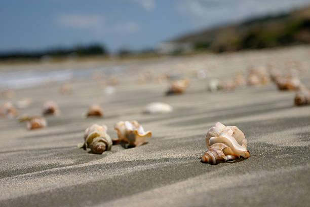 Shells along Mahanga Beach - Close focus stock photo