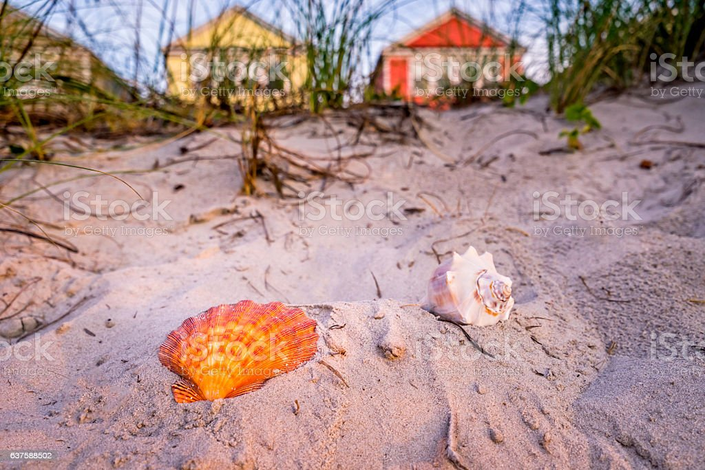 Shells and beachfront vacation cottages in summer stock photo