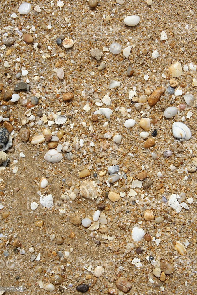 Shells and Sand royalty-free stock photo