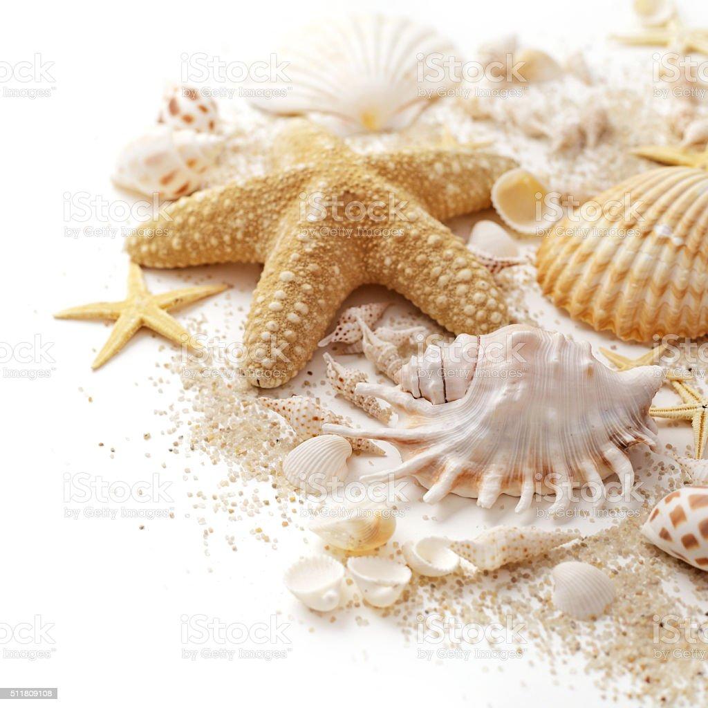 shells and sand stok fotoğrafı