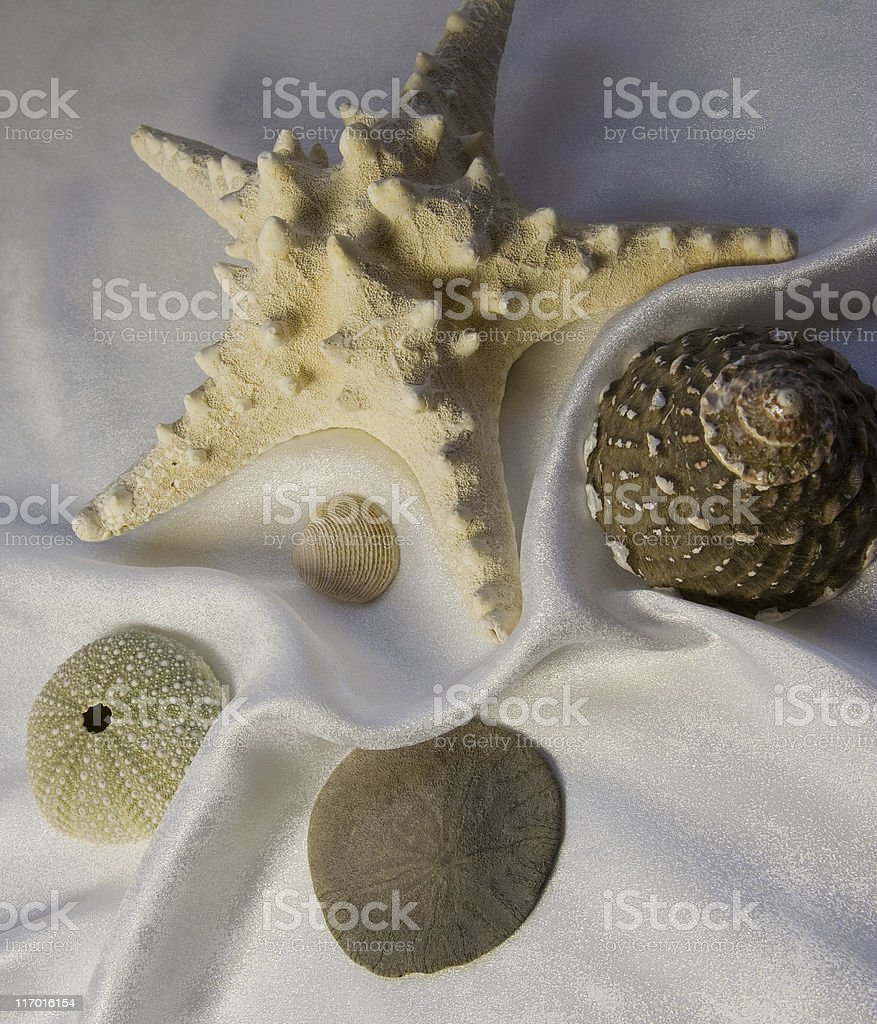 Shells and Starfish on white royalty-free stock photo