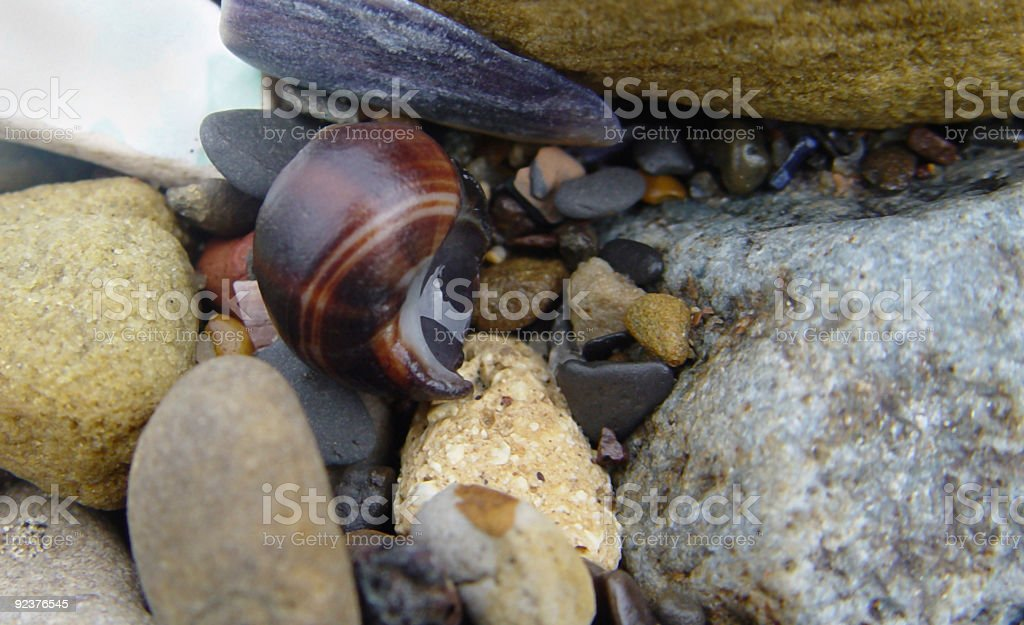 Shells and Stones at Whitby royalty-free stock photo