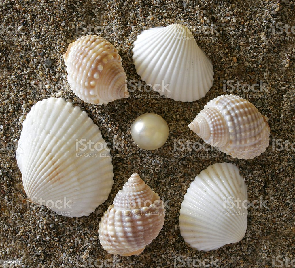 shells and stones royalty-free stock photo