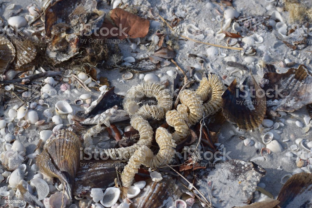 Shells and Whelk Casing stock photo