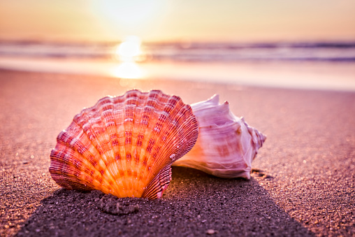 Shells, beach and morning sunrise