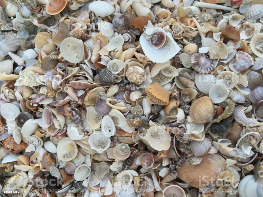 Shells by the sea royalty-free stock photo