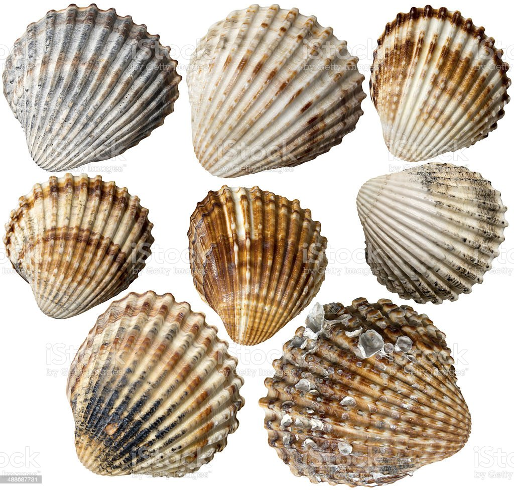 Shells Collection stock photo