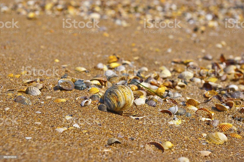 쉘 모래 royalty-free 스톡 사진
