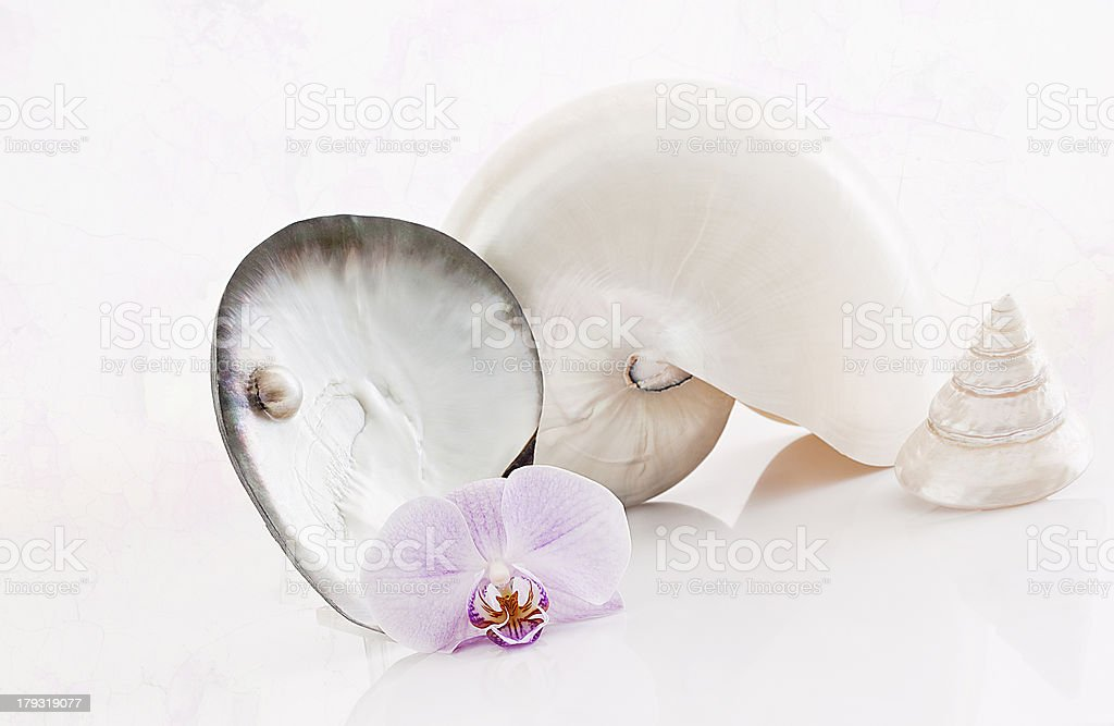 Shells, nautilus and orchid. royalty-free stock photo