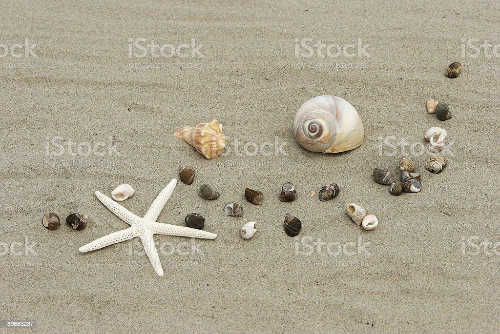 Shells of the Sea royalty-free stock photo