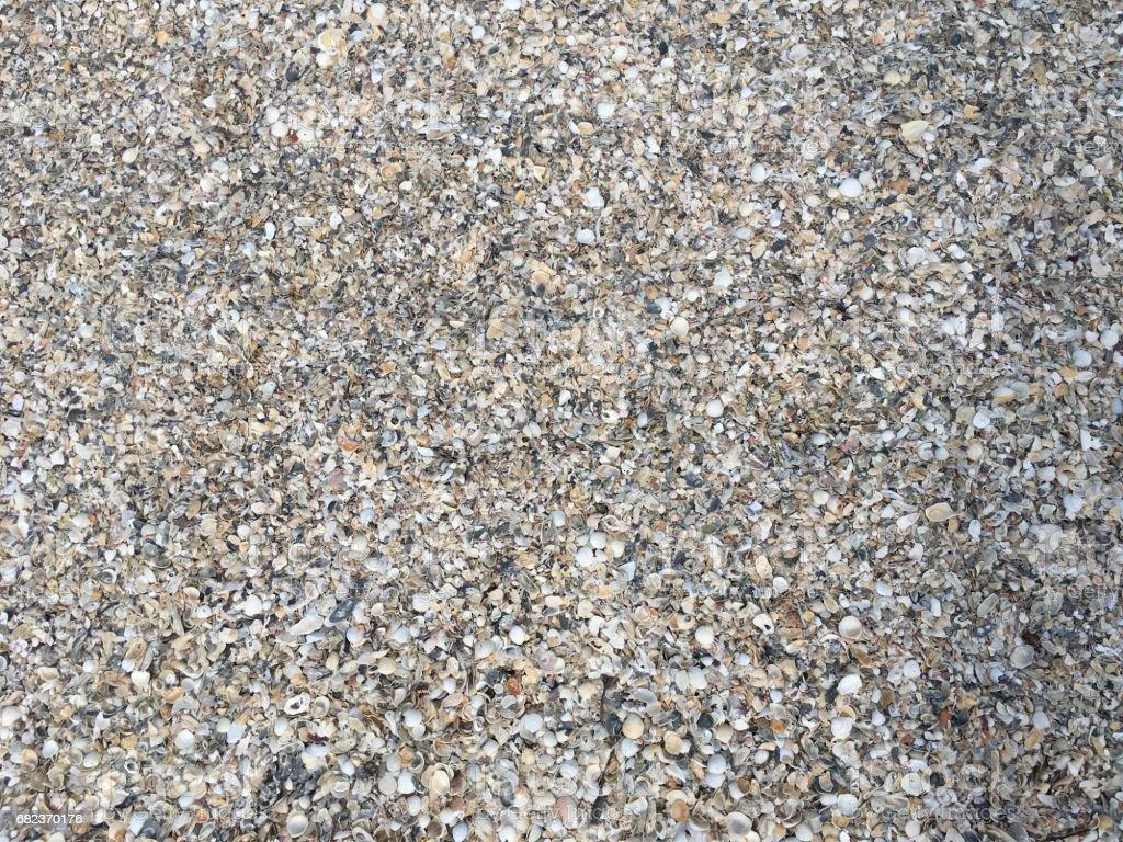 Shells on Beach zbiór zdjęć royalty-free