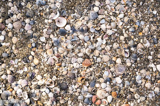 istock Shells on sand as background 1124394116