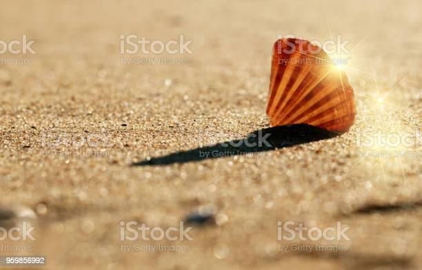 Shells on sandy beach background, sea and beach concept
