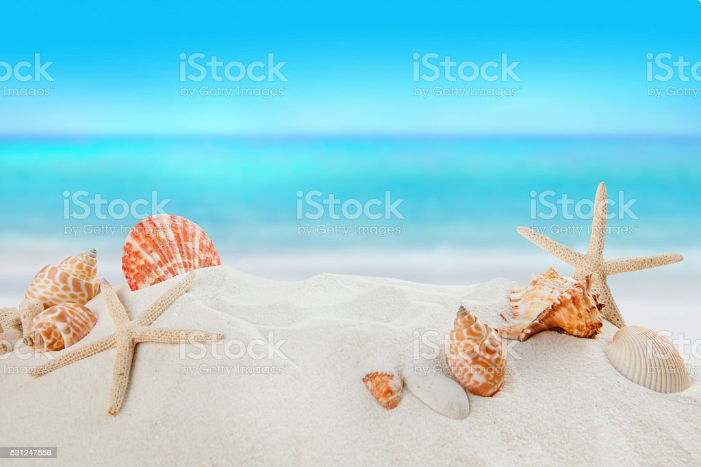 shells on sandy beach, Summer concept stock photo