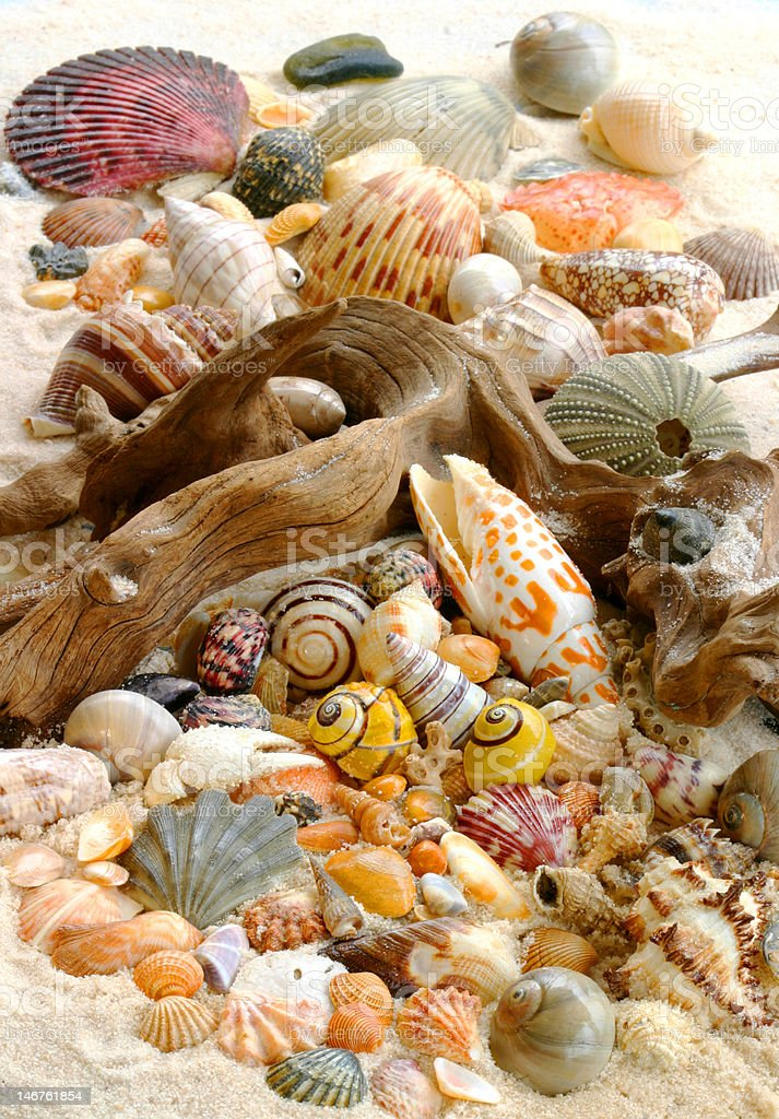 Shells on the Beach (wide angle shot) royalty-free stock photo