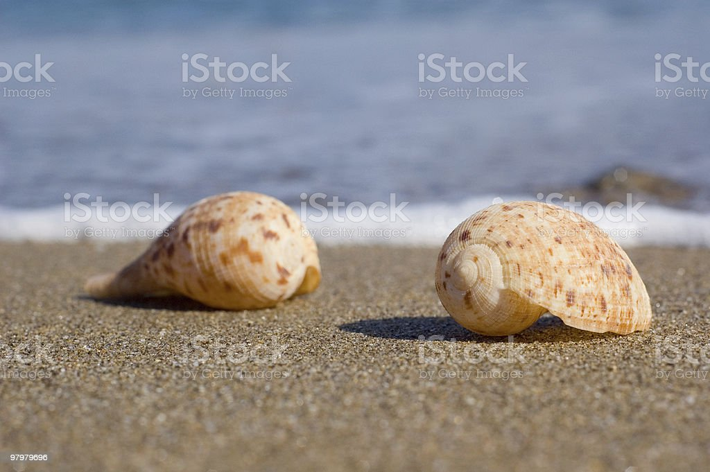 shells on the beach royalty-free stock photo