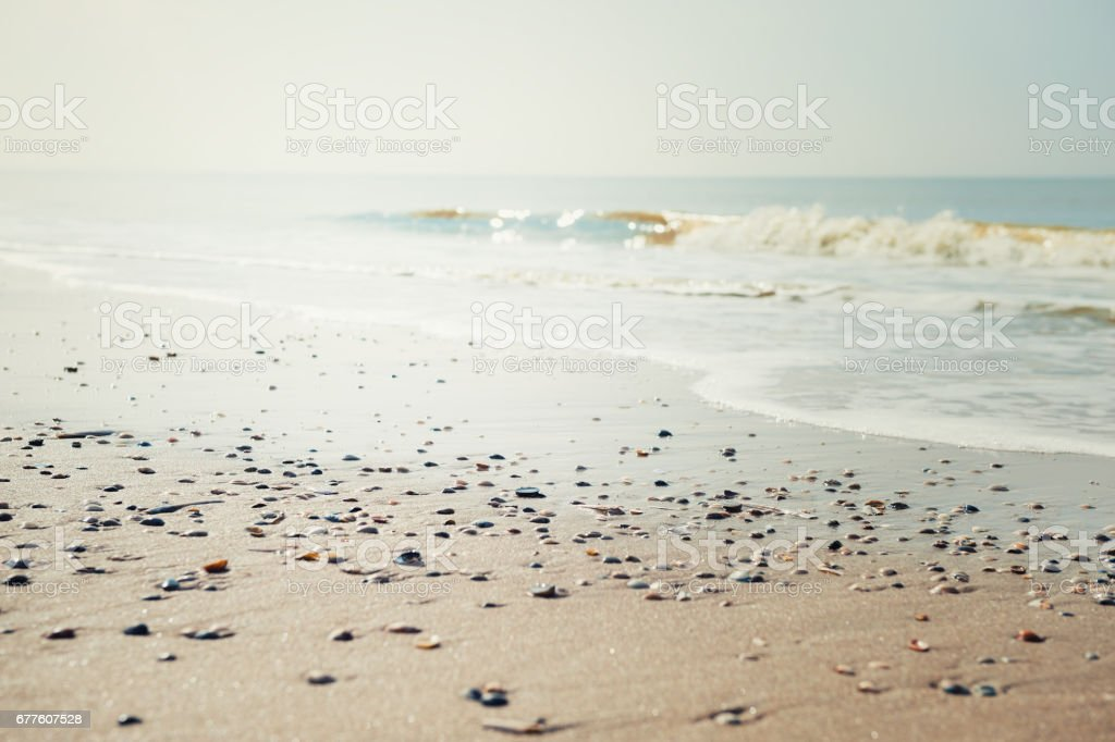 Kumsal ve deniz arka planda kabukları stok fotoğrafı