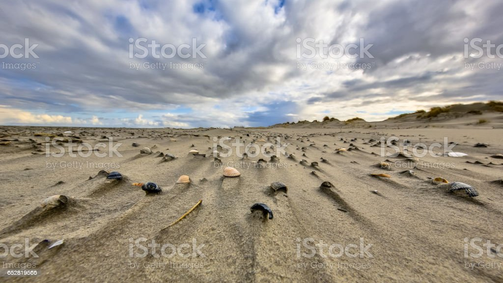 Shells on wind swept beach stock photo