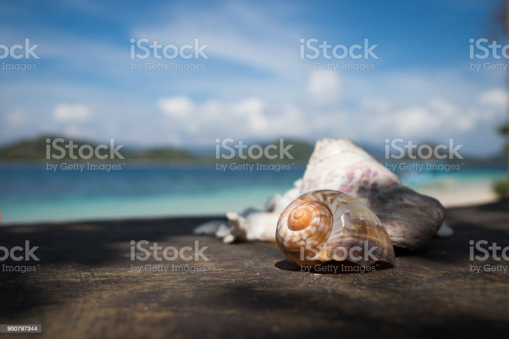 Shells on wooden surface with beach in background stock photo