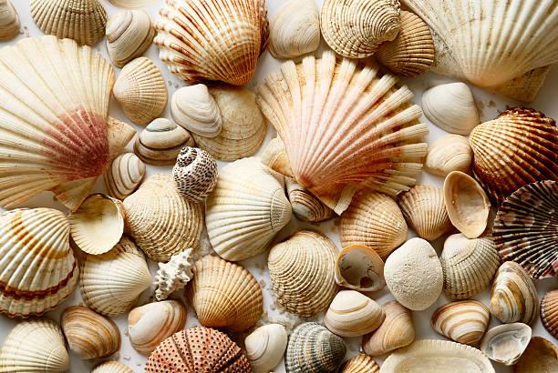 - Shells – Foto
