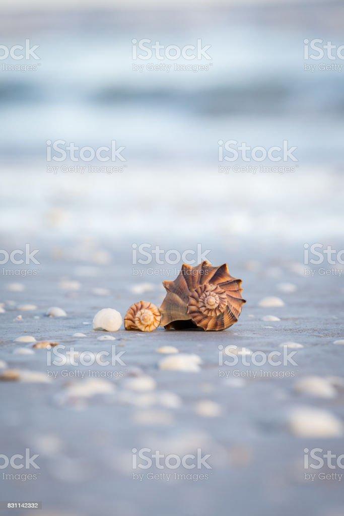 3 Shells stock photo