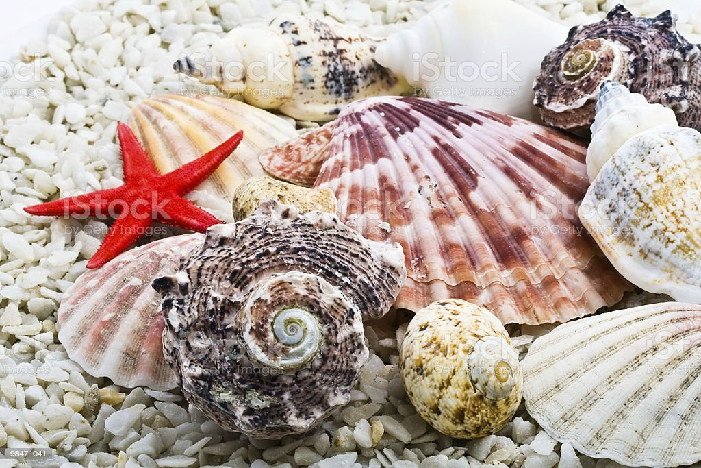 Shell foto stock royalty-free
