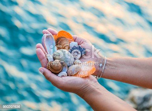 Shells summer concept