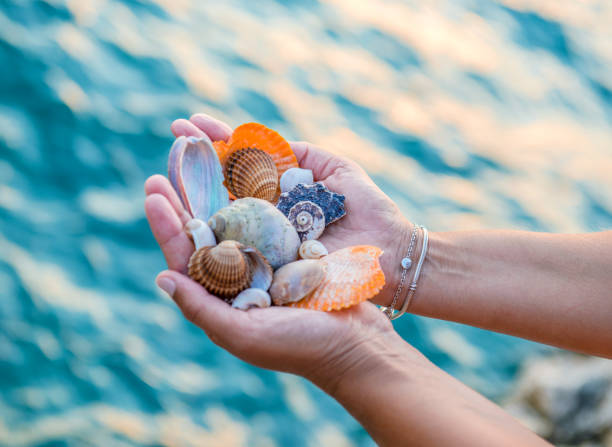 shells summer concept - little girl picking up sea shells at the beach stock pictures, royalty-free photos & images
